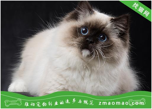 训练猫咪的基本方式有哪些?