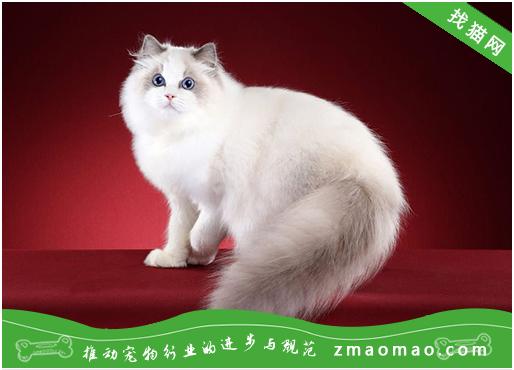 教宠物猫学会正确使用猫洞
