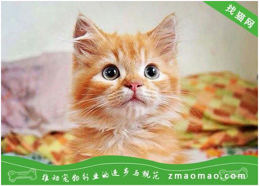 猫猫随便大小便怎么办