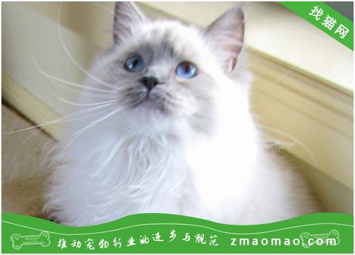 如何从猫咪的脸上看出它的情绪?