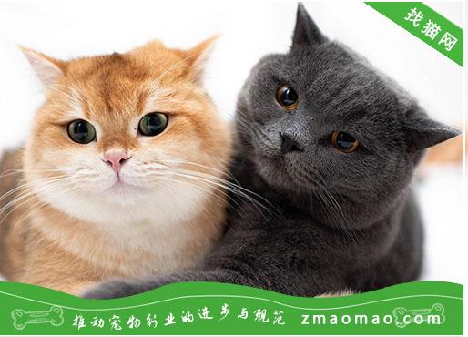 猫咪喜欢抓挠家具怎么办?