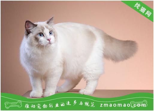 训练宠物猫咪的最适合模式