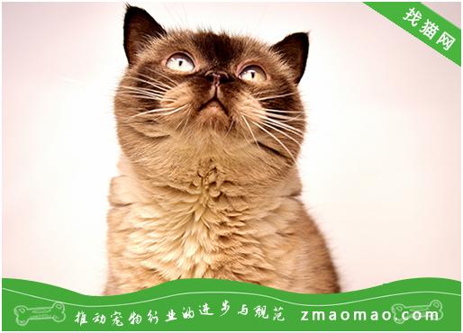 猫为什么不能用塑料碗喝水 容易出现黑下巴