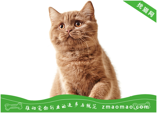 怎么让猫不翻垃圾桶 这四招主人可以学学