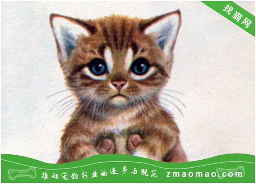 猫为什么喜欢陪孩子写作业 猫为什么喜欢看人写作业