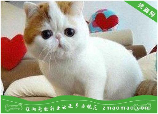 为什么给猫喂食一定要定时喂养 科学喂养猫一天几顿