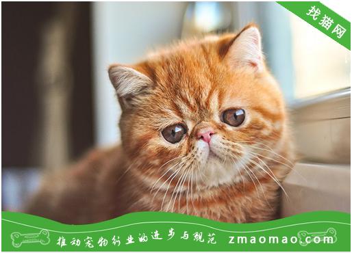 什么猫适合男生养 谁说男生不适合养猫