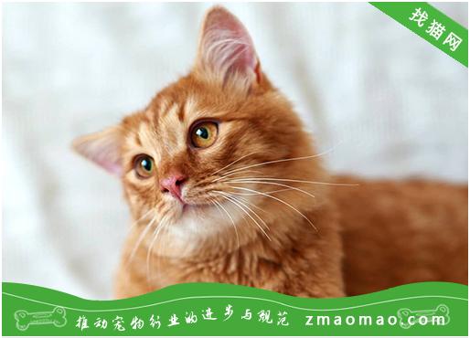 新手养猫公的好还是母的好 选择公猫母猫你弄清楚了吗?