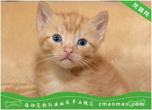 世界十大名贵猫品种 世界名贵猫的品种大全
