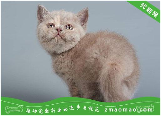 为什么有些流浪猫的耳尖会有缺口 是TNR绝育标识!