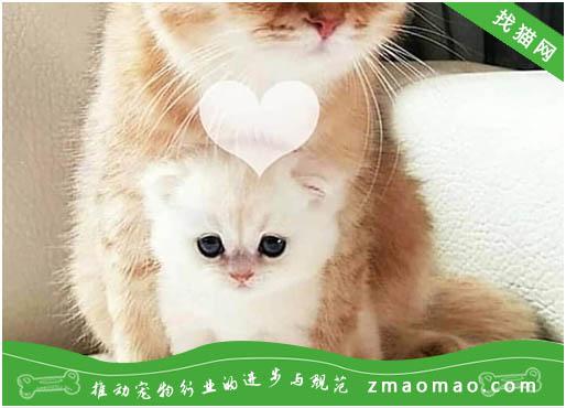 猫咪带铃铛会影响听力吗 什么样的猫需要带铃铛
