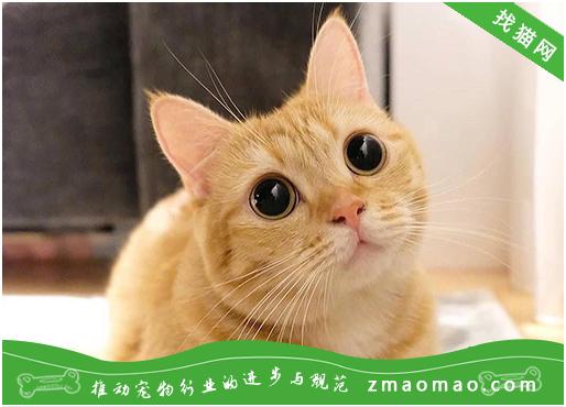 怎么看懂猫咪的想法 读懂猫米的肢体语言