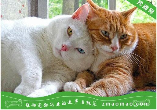 母猫绝育有几种方式?