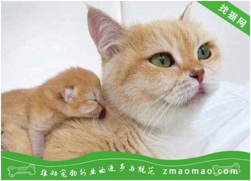 猫的舌头为什么有刺 猫为什么会舌头上有齿齿