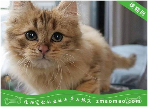 猫肉垫有什么作用 猫肉垫的五大功能