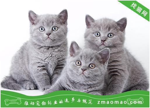为什么说养猫穷三代 养猫穷三代的原因是什么