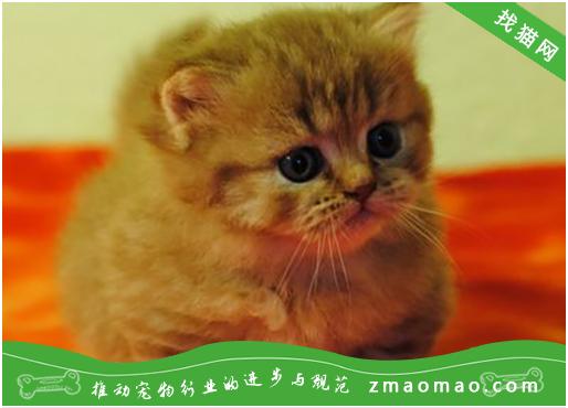 新买的猫绝食怎么办
