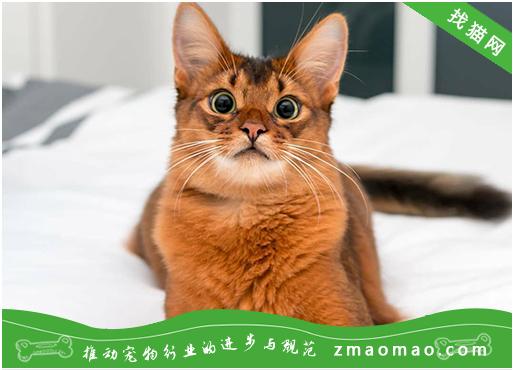 猫咪咕咕咕的叫声是什么意思