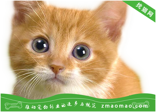 公猫绝育后的注意事项