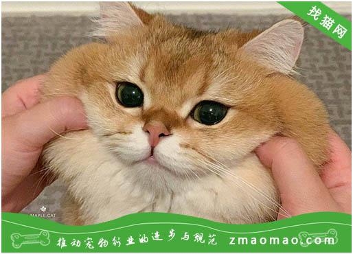 猫吃猫砂能排出吗
