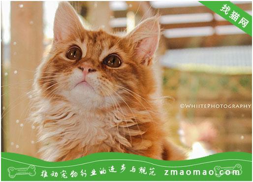 猫咪发腮是什么意思