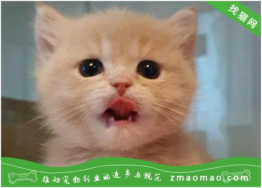 猫咪要生了一直叫怎么办