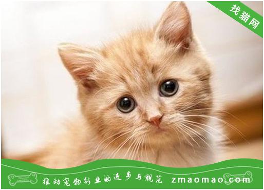 母猫难产几率大吗