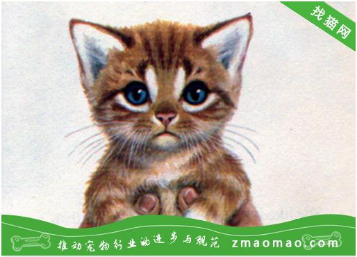 猫尿道炎吃什么药