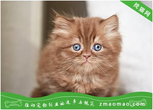 猫总吐怎么回事