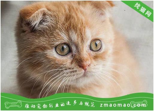 中华田园猫有哪些品种 中华田园猫品种大全
