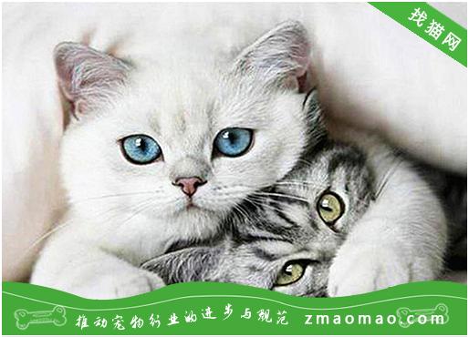 猫咪一般多久开始发情