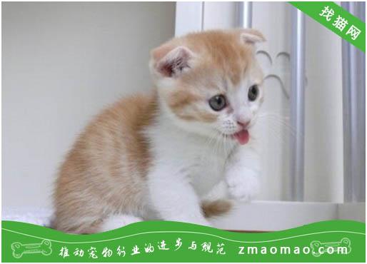 猫咪断奶后腹泻是什么原因?