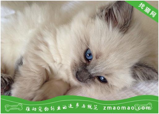 猫咪生病的表现?观察猫咪是否健康的方法