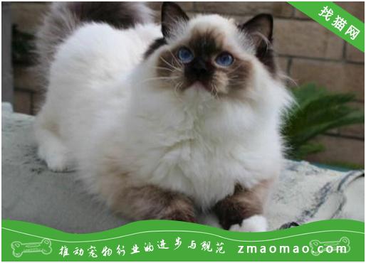 猫咪异物性肺炎(吸入性肺炎)的症状及防治方法
