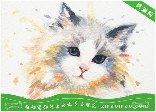 猫咪上呼吸道感染综合症的症状及治疗方法
