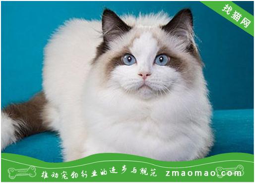猫咪患青光眼的病因及症状