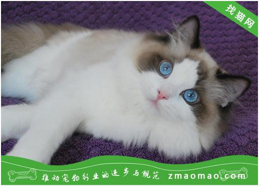 猫咪白内障的病因及症状