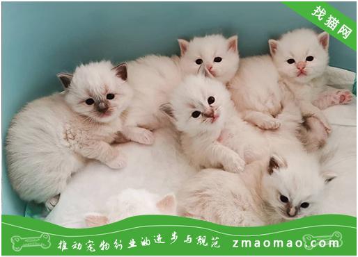 猫咪难产会有哪些征兆?什么情况下属于难产呢