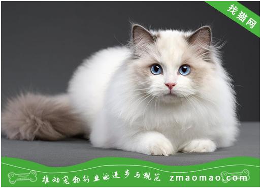 猫咪感染弓形虫的初期症状是什么