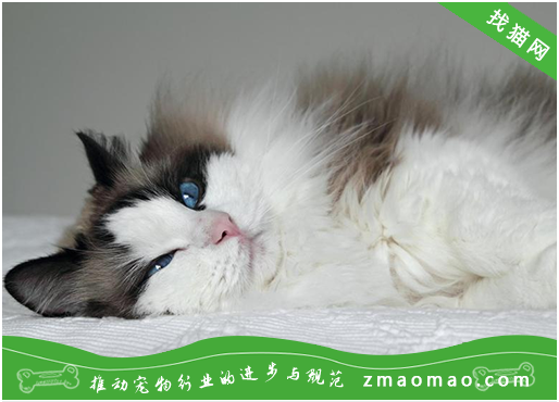 猫瘟治疗时的需要注意的问题