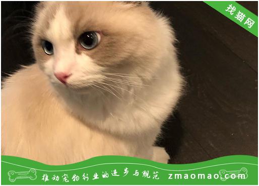 老年猫常发生的疾病有哪些