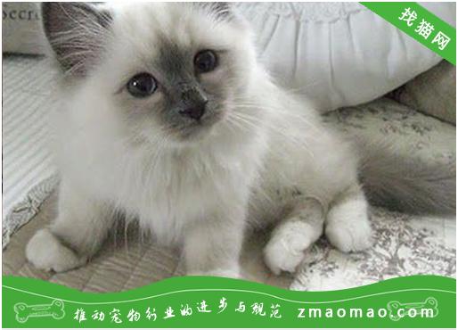 猫咪霉菌感染症的症状及治疗方法