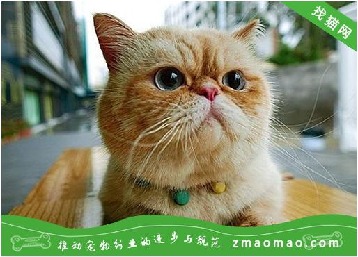 猫咪霍纳氏综合症的症状及治疗方法