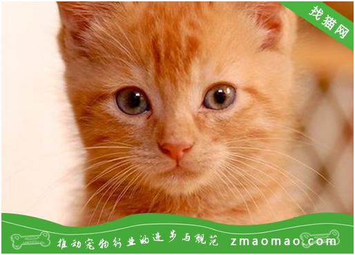 猫咪糖脂异化病的病因