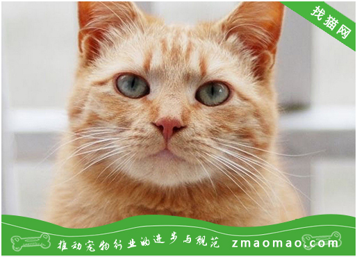 猫咪淋巴肉瘤的防治方法