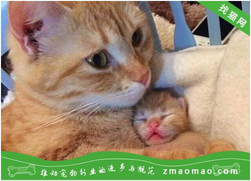 秋季需预防猫咪三大类疾病