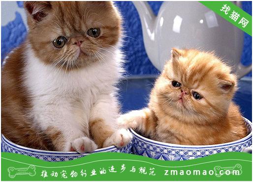 猫抓病有哪些症状呢?被猫抓伤后的3