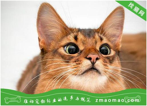 猫咪食欲异常是什么原因造成的?有什么表现形式