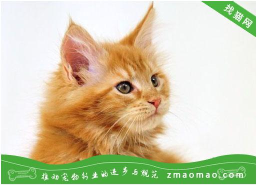 猫咪得了糖尿病有哪些症状