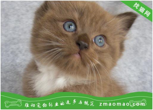 猫咪佝偻症有哪些症状?佝偻病怎么治疗呢